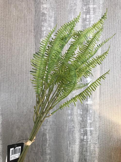 Fern leaves bundle