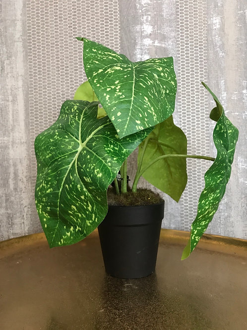 Plant W/5 leaves