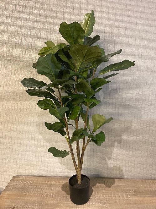 Fiddle plant
