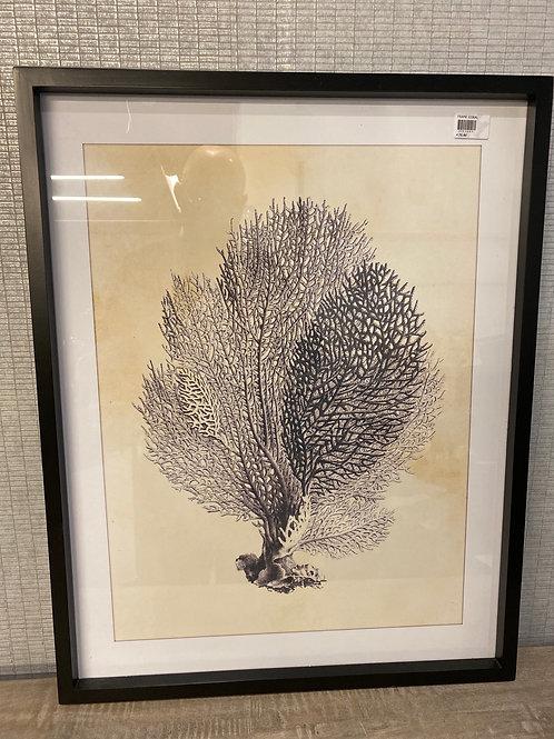 Coral frame 2