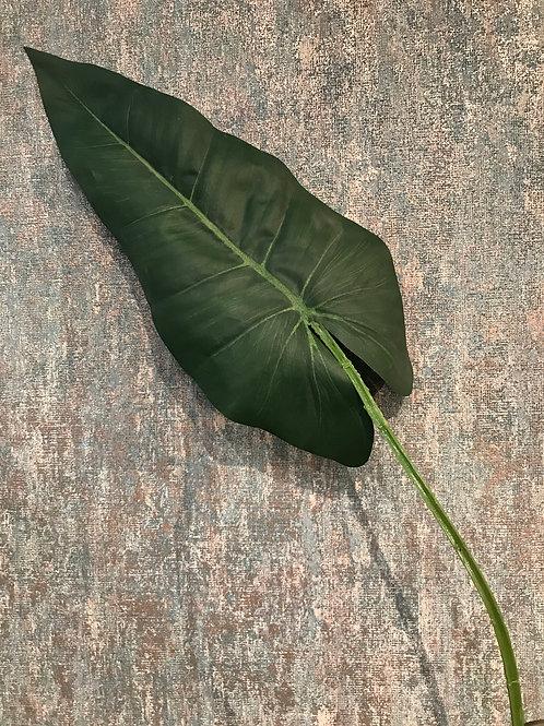 Large Anthurium