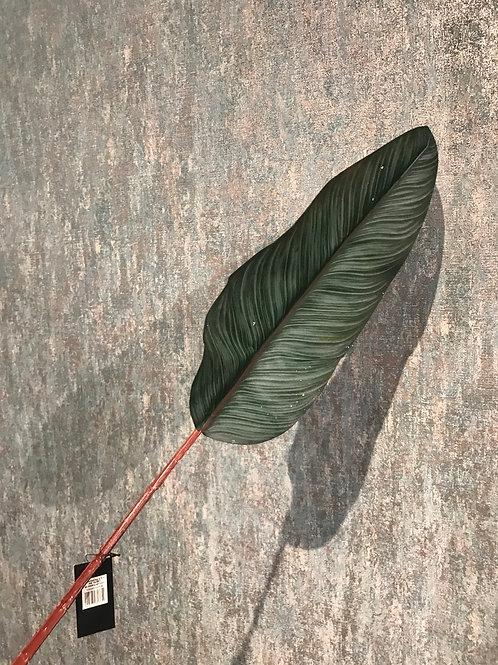 Bird of Paradise Leaf