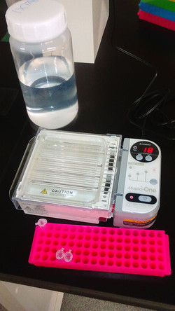 1st Electrophoresis in the Lab