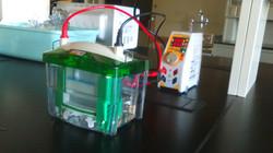 1st Acrylamide Gel Electrophoresis