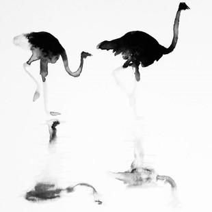 Ink & water ostrich