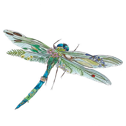 Dragonfly Life