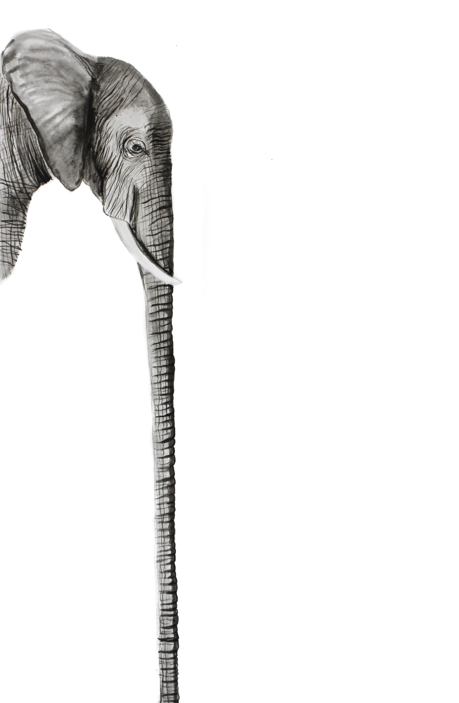 Long Elephant