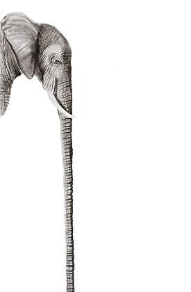Long: Elephant