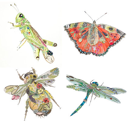 Insect Life Collection