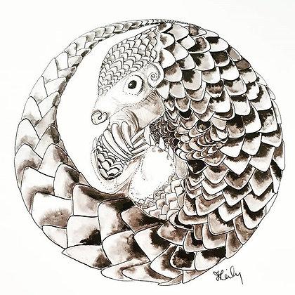Circle: Pangolin