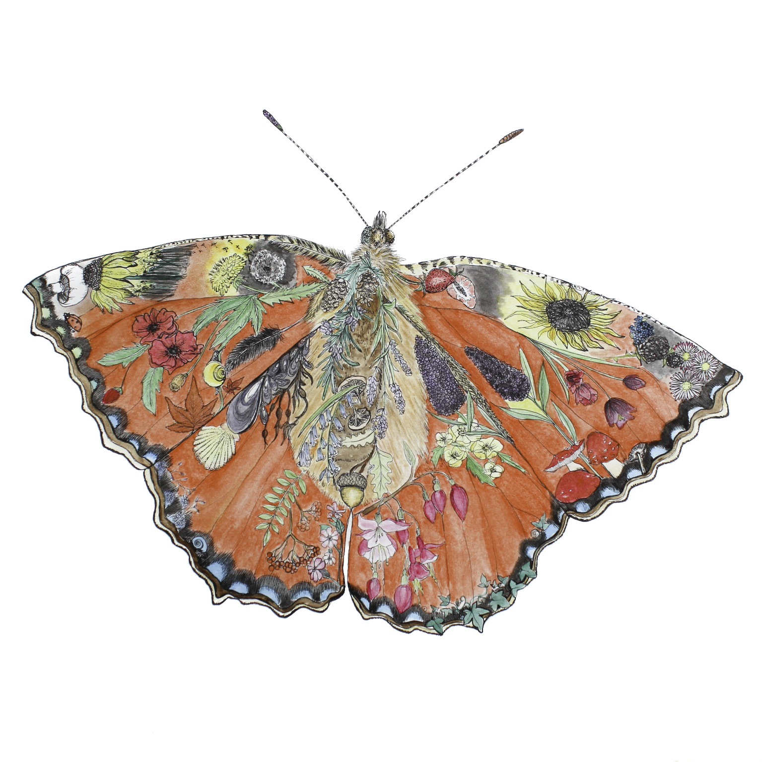 New! Butterfly Life