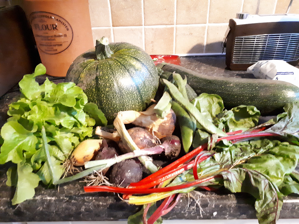 Veg from our allotment