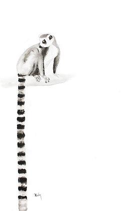 Long :Lemur