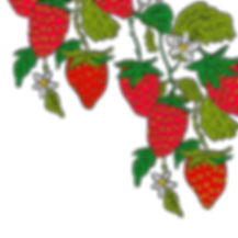 strawberrys_edited.png