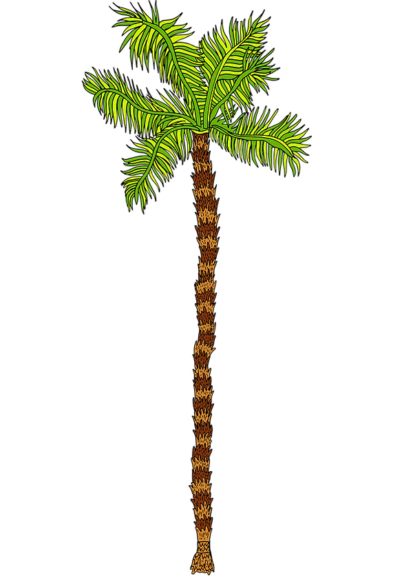 palm tree long png.png