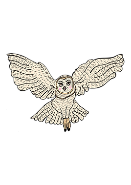 owl flying.png