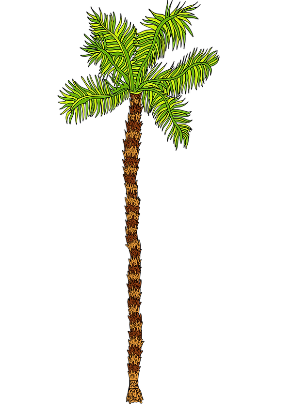 right hand side palm tree.png