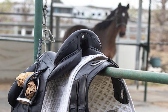 Saddle and Bay Horse