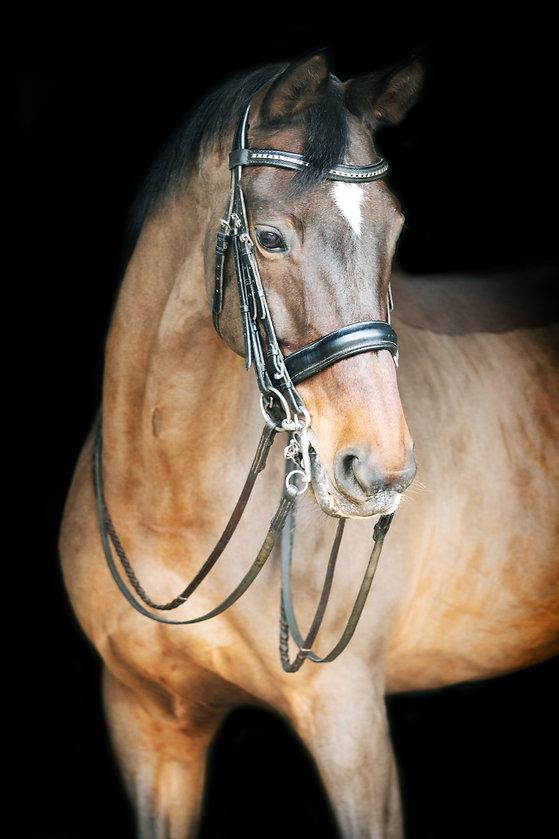 Bay Horse in Barn