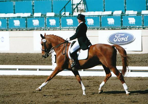 Susan Riding Bay Horse at Competition