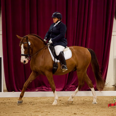 Competing on bay horse at dressage competition
