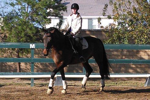 Jordan Training on Bay Horse