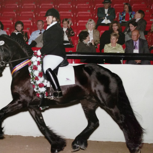 Susan Competing With Dark Bay Horse