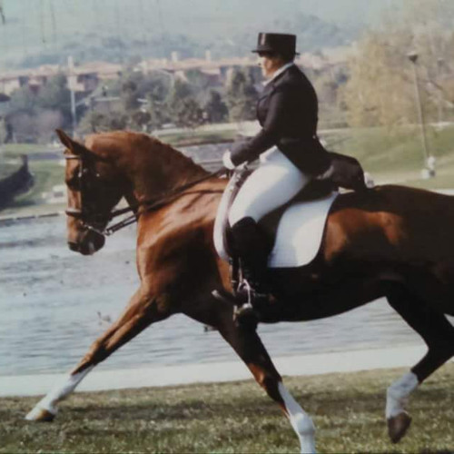 Rider on Bay Horse Near Lake