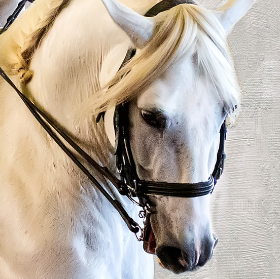 Champagne Horse