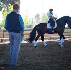 Rider training on bay horse at conrad clinic