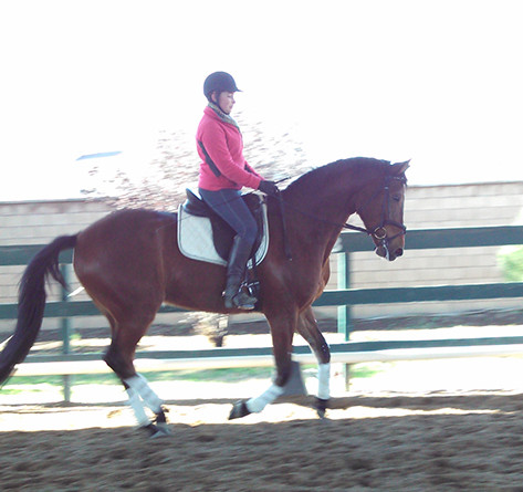 Rider training on the ranch on bay horse