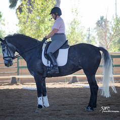 Rider on bay horse at Conrad Clinic
