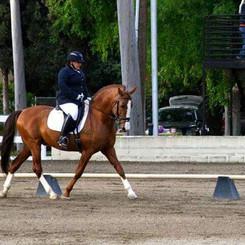 Susan Training On Bay Horse