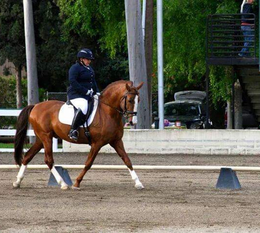 Susan Training On Bay Horse