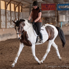 Training on white and bay horse
