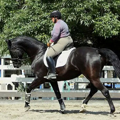 Susan Peacock riding a black horse trotting in a dressage arena