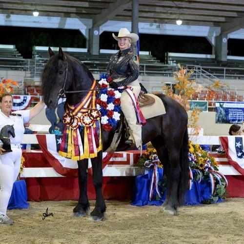 Horse On Podium with Awards
