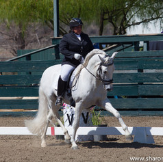 Susan Peacock riding a grey horse at a dressage show in an outdoor arena
