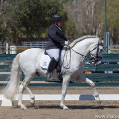 Susan Peacock riding grey horse in a dressage arena