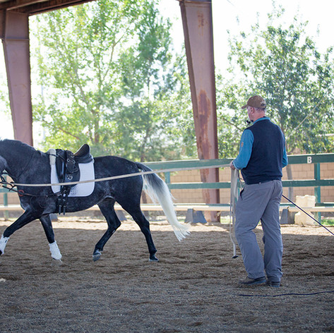 Trainer working with bay horse