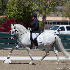 Susan Peacock riding a grey horse trotting at a dressage show