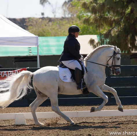 Susan Peacock riding a grey horse at a dressage show
