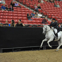 Susan Competing With White Horse