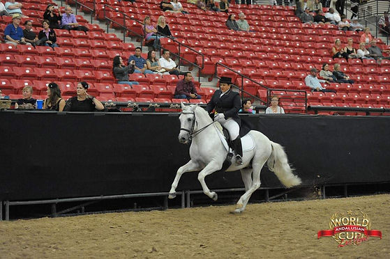 Susan Competing On White Horse