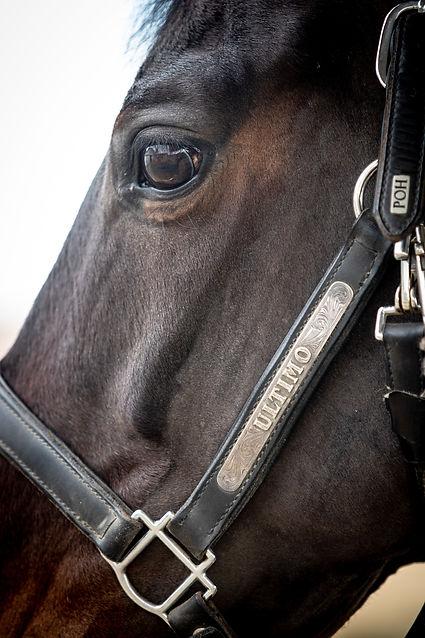 Bay Horse Closeup