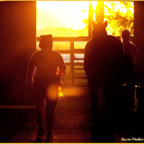 Susan Peacock silhouette leading a horse out a barn door into a sunset