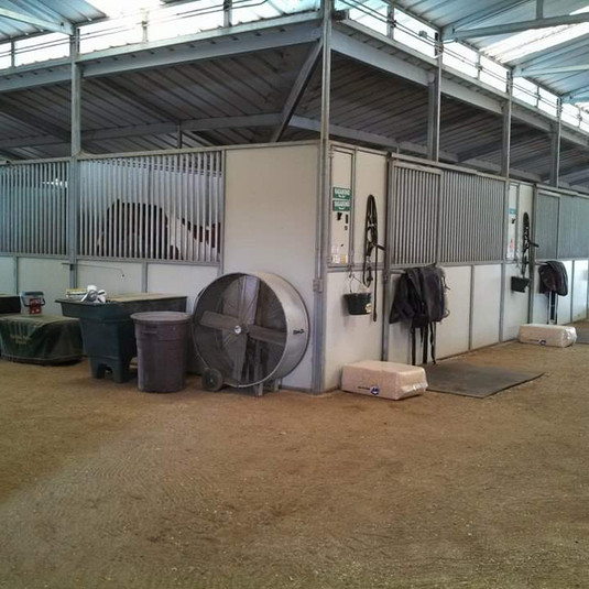 Dressage Peacock Stable