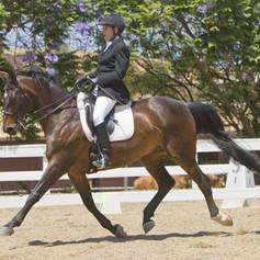 Rider training on bay horse