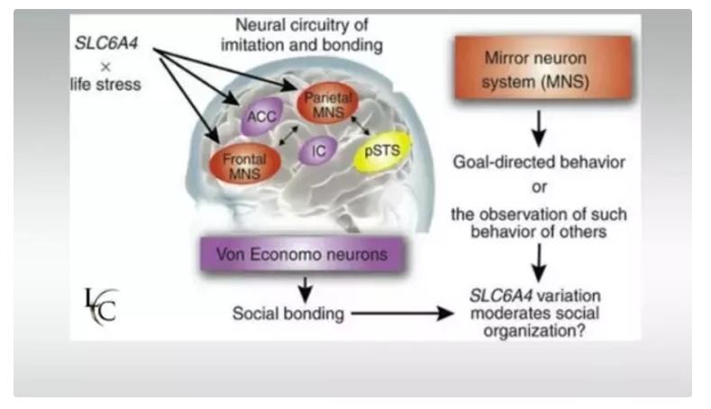 加州理工學院研究人類的大腦對於面部表情的理解