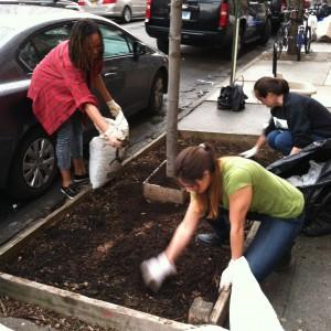 Tree Care Tuesdays Kick Off!